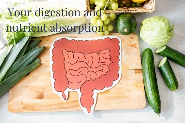 nutrient absorption and healthy digestive system